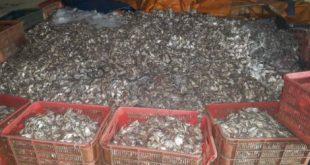 Cá tạp chưa được công nhân chế biến tại nhà máy của DNTN Tuấn Thanh
